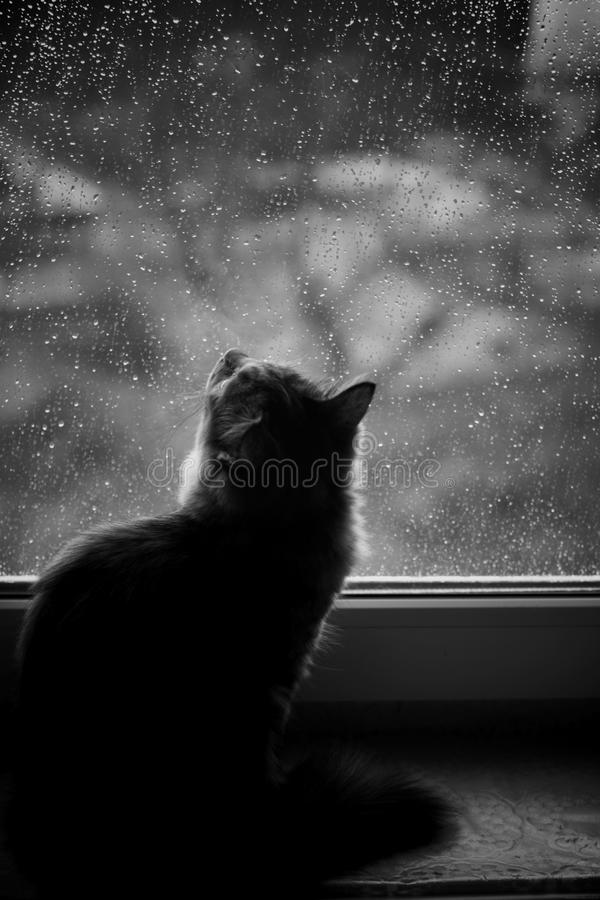 Little cat sitting on window stock images