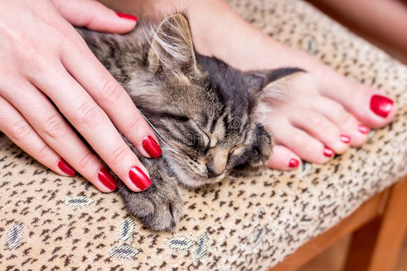 A little cat sleep at the girl`s feet. A girl with a fashionable. Manicure worries about animals royalty free stock photography