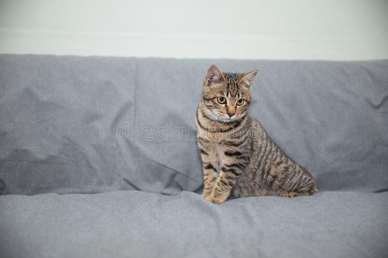 Little cat. On the sofa royalty free stock images