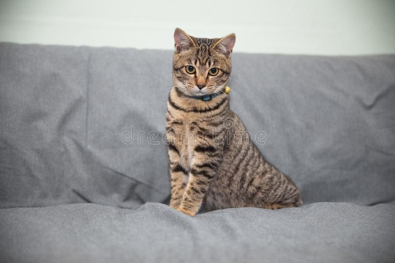 Little cat. On the sofa stock photography