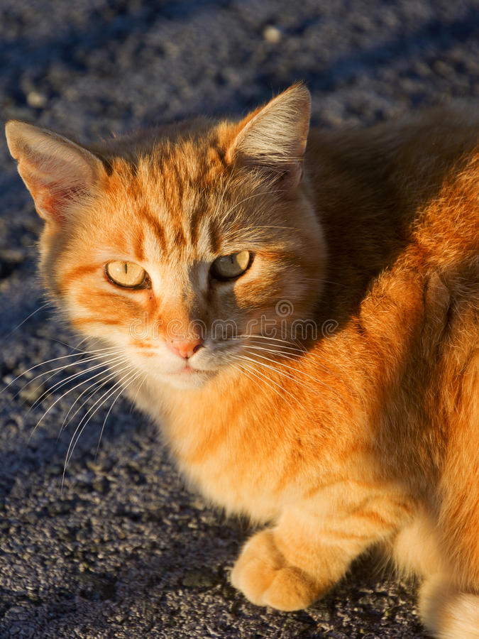 Download Little cat staring stock image. Image of light, outdoor - 31453925