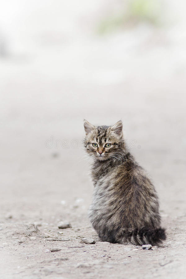 Little cat. On the street royalty free stock photos