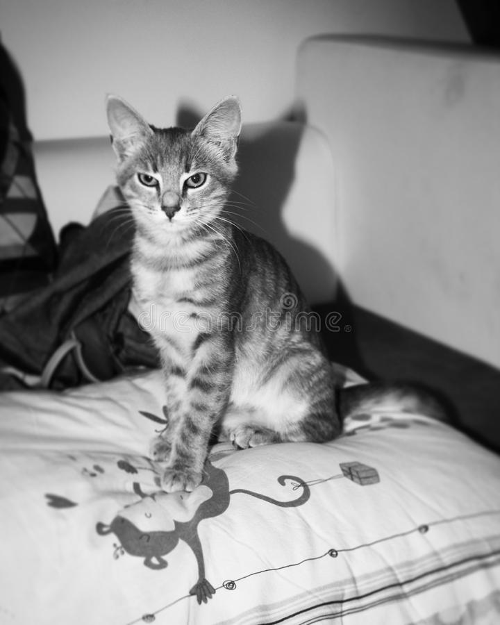 Little cat. Wake up stock photo