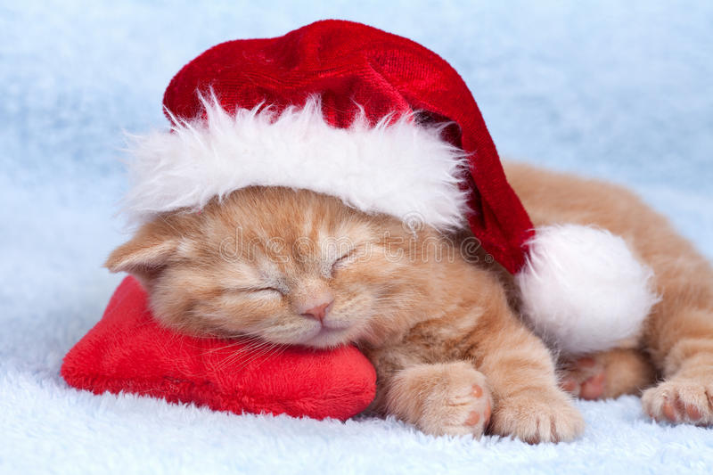 Little cat wearing Santana's hat. Sleeping with toy mouse stock photos