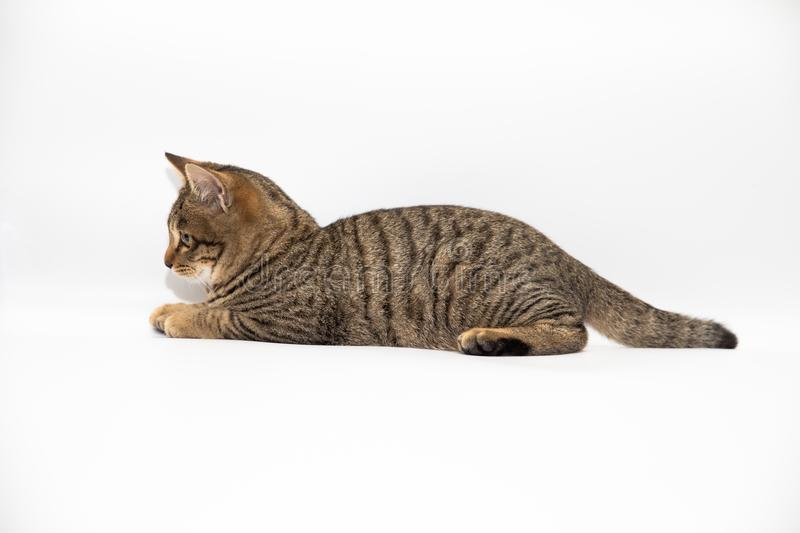 Little cat. With white color background royalty free stock photography