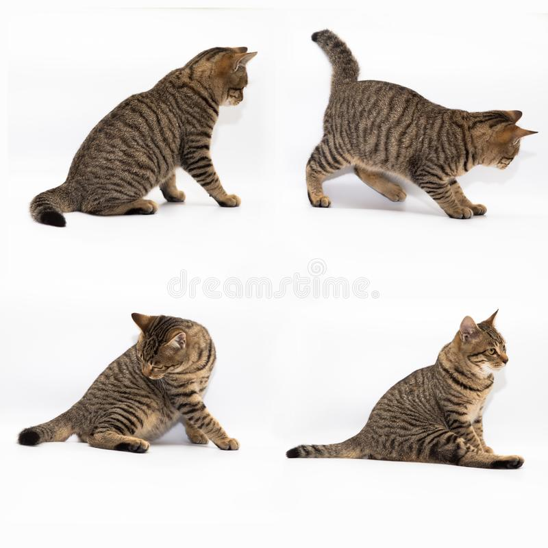 Little cat. With white color background stock photos