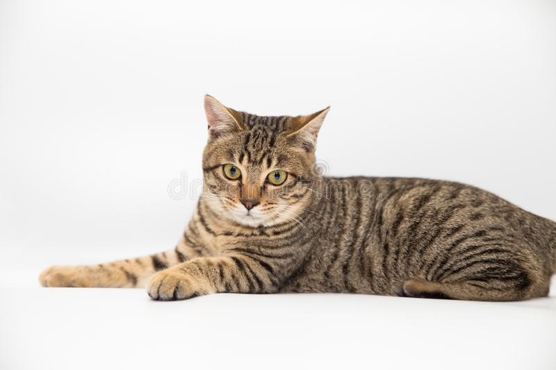Little cat. With white color background royalty free stock images