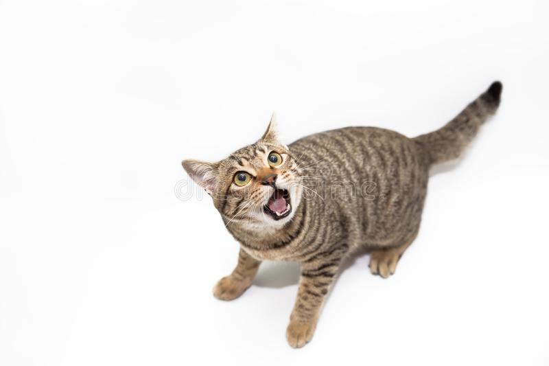 Little cat. With white color background stock photography