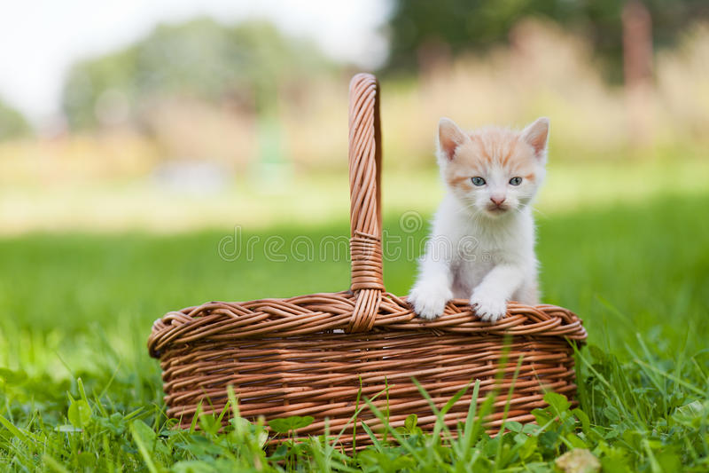 Little cat in wicker basket. On green grass outdoors stock images