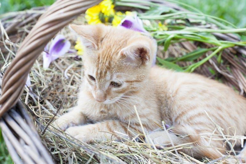Little cat in wicker basket stock photos