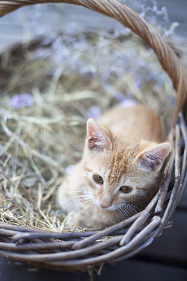 Little cat in wicker basket stock images
