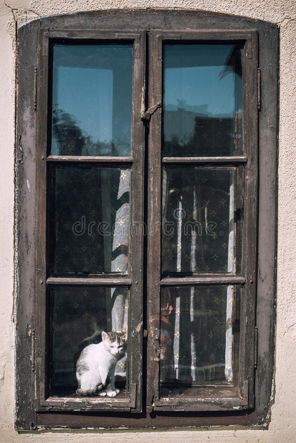 Little cat in the window. Little sad cat sitting in the old window royalty free stock photo