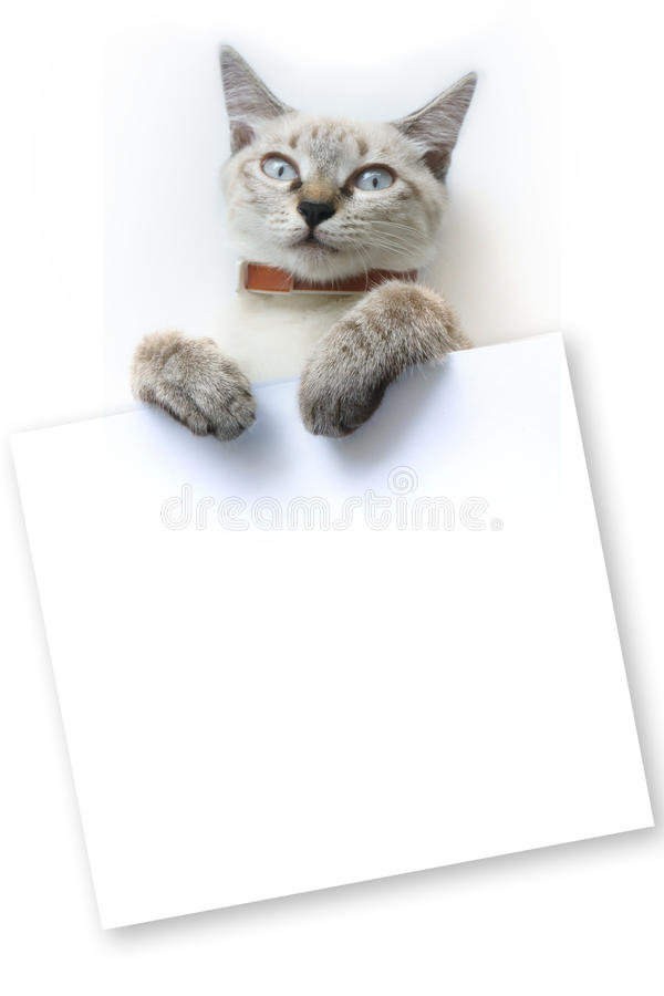 Free Little Cat With Whiteboard Stock Image - 88342311