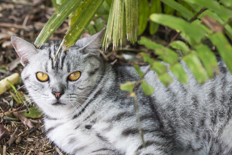 Little cat, yellow eyes, lying under the tree. Little cat, yellow eyes, lying under the tree stock photos