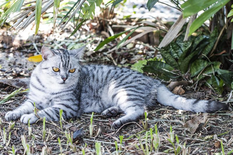 Little cat, yellow eyes, lying under the tree. Little cat, yellow eyes, lying under the tree royalty free stock photo