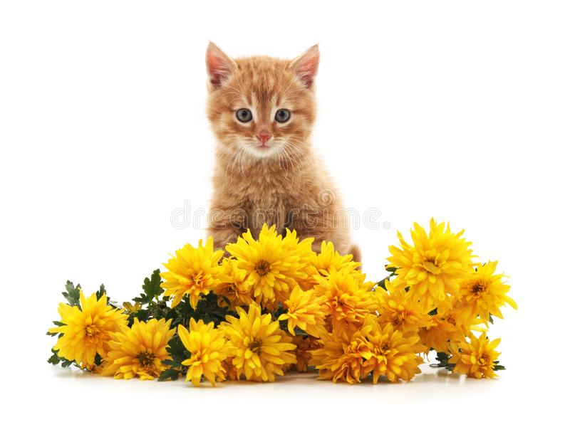 Little cat with yellow flowers royalty free stock photo