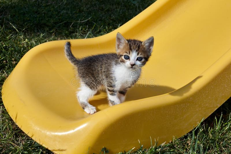 Little cat on a yellow slide. stock photos
