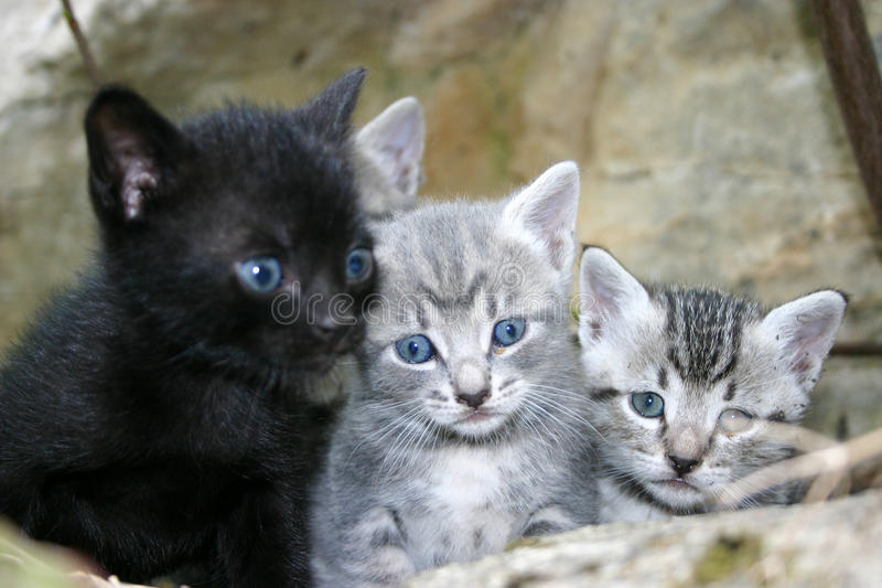 Download Little Cats Stock Image - Image: 11163381