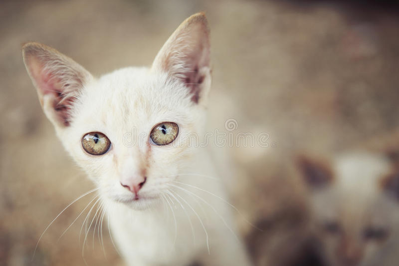 Little cats royalty free stock photos