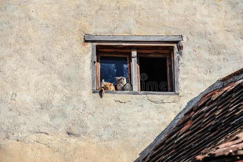 Little cats sitting on old window stock photos