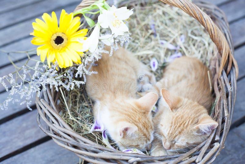 Little cats sleeping in wicker basket stock images