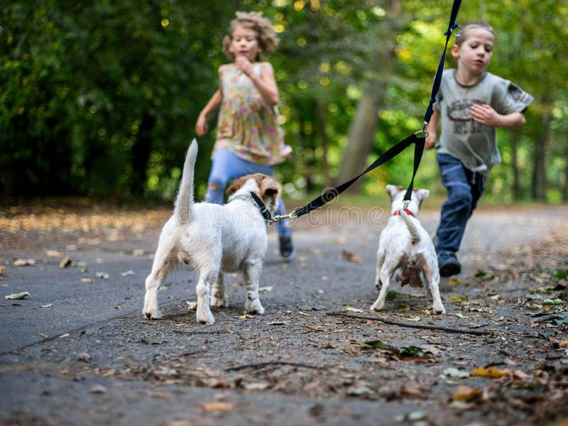 Little caucasian kids running around the autumn park with the dogs. stock photo