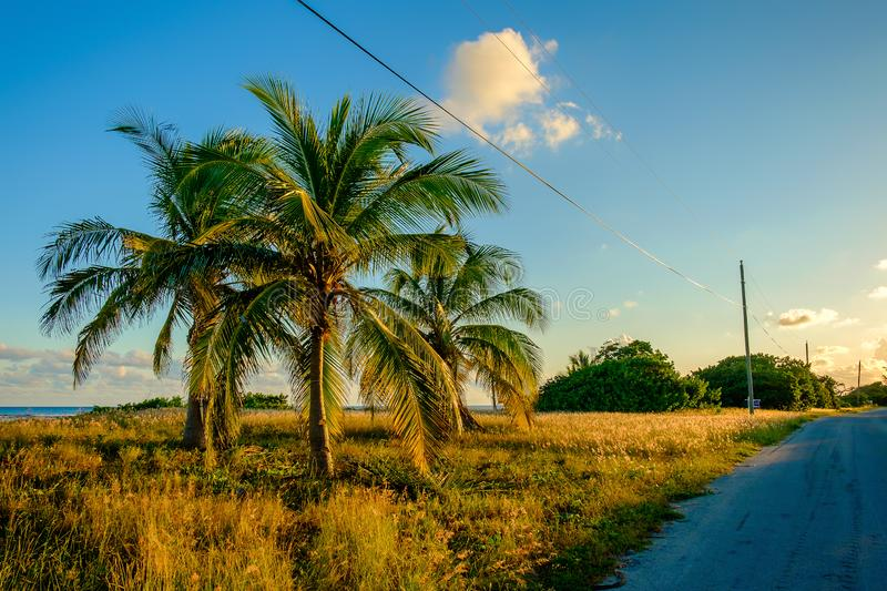 Little Cayman-Guy Banks Rd-3 royalty free stock photography