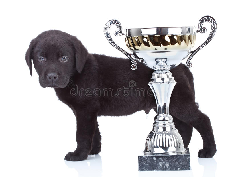 Download Little champion stock photo. Image of view, behind, canine - 21362942
