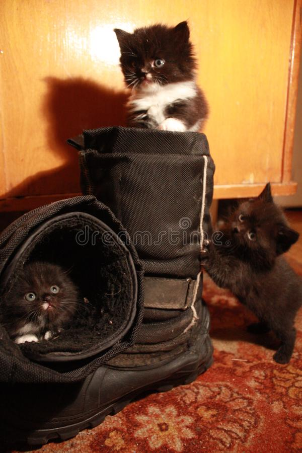 Kittens and boots stock photos