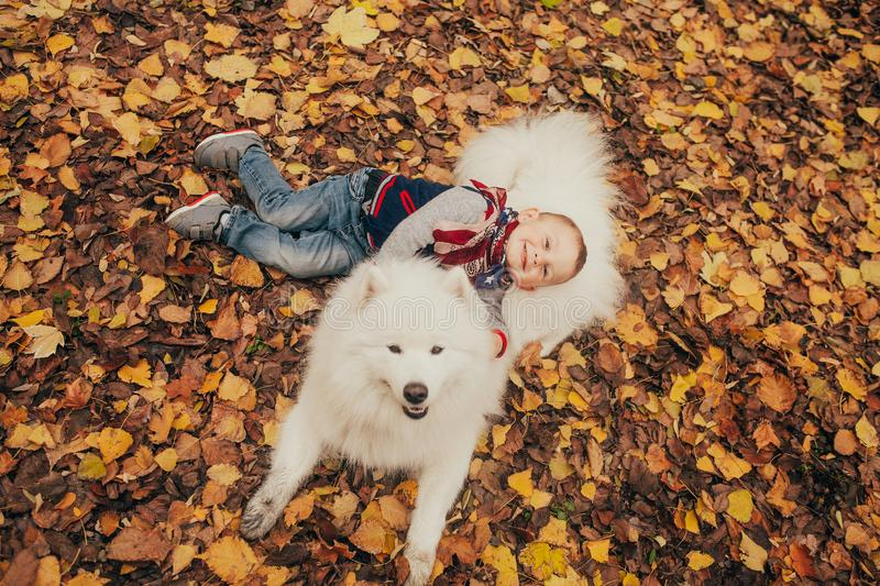 Little cheerful boy sits next to samoyed dog and plays with him stock photos