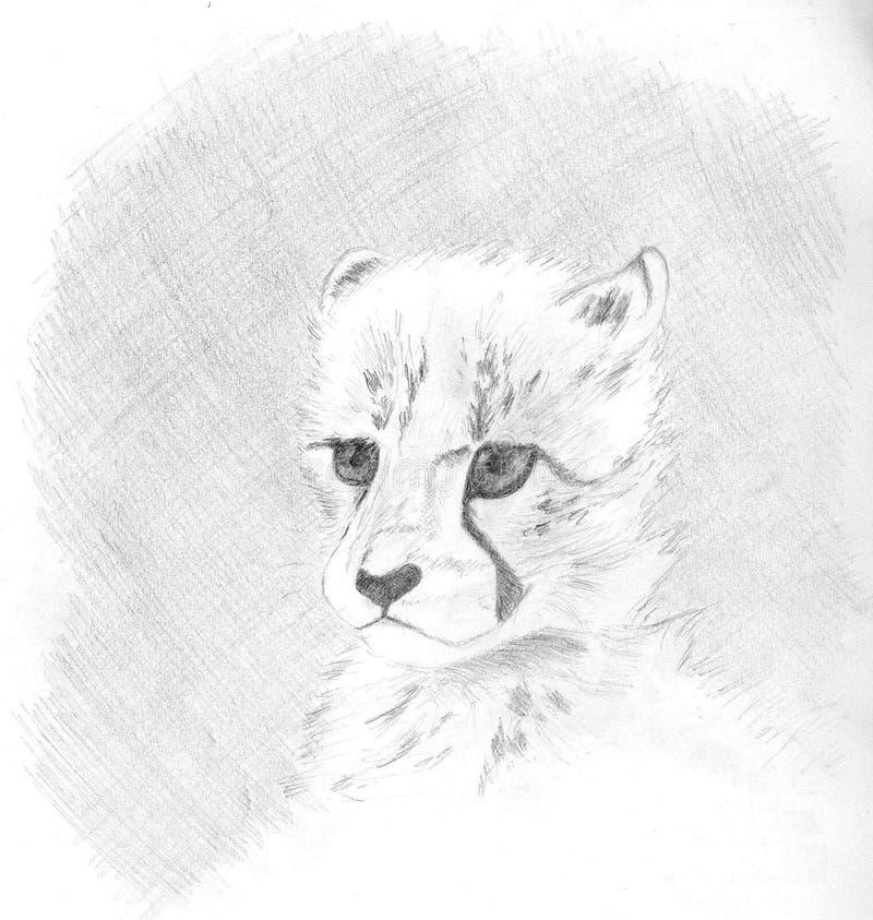 Little Cheetah royalty free stock photos