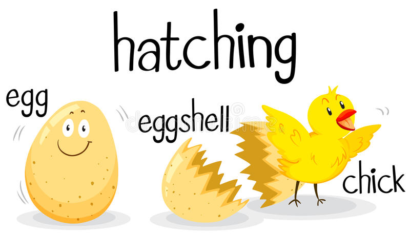 Little chick hatching from the egg. Illustration royalty free illustration