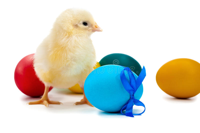 Little chicken with Easter eggs. isolated stock photography