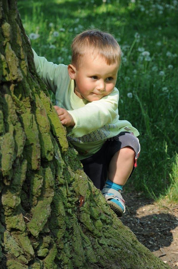 Little child climbing tree stock photography
