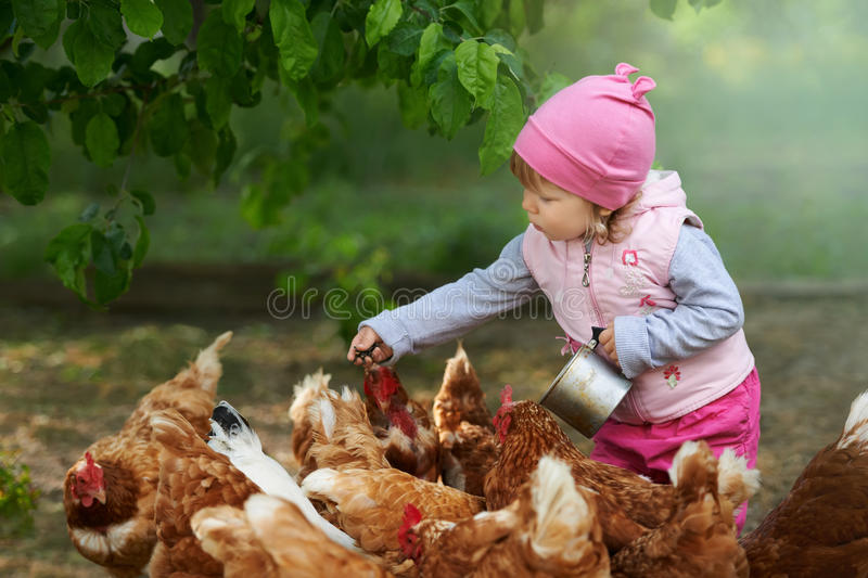 Little child enjoying feeding chicken.