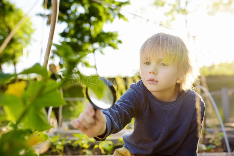 Little child exploring nature with magnifying glass in community kitchen garden . Close up. Little boy looking with magnifying stock photography