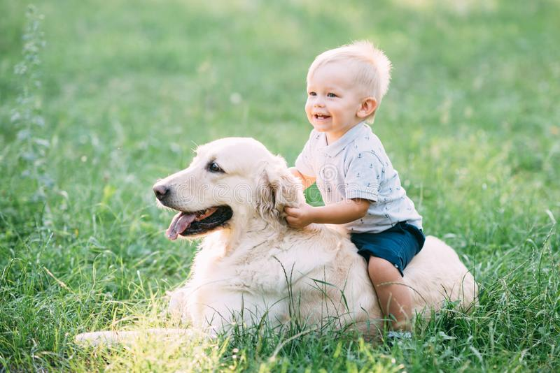 Little child playing with Labrador retriever dog together in wood royalty free stock image