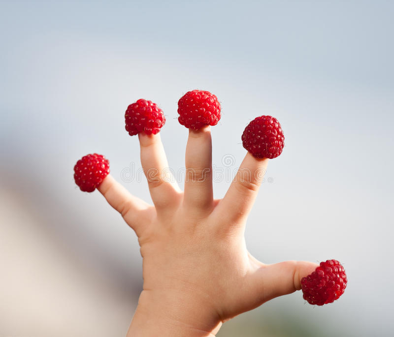 Little child's hand with raspberries royalty free stock photography