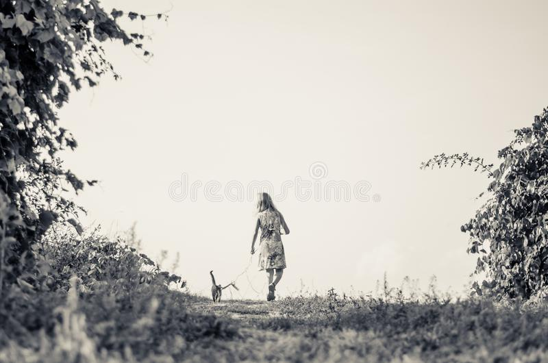 Little child walking with cat in lead stock photos