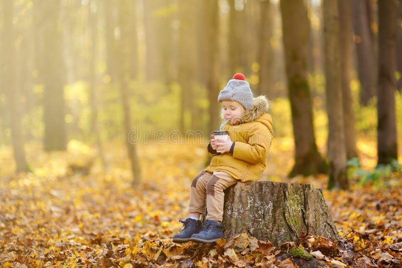 Little child walking in the forest and drinking hot cocoa at cold autumn day. Toddler boy enjoy of fall weather stock images