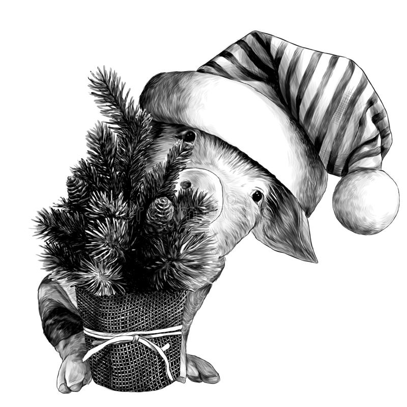 Little Christmas pig in big striped hat with pompom sitting and peeking out from behind small decorative Christmas tree stock illustration