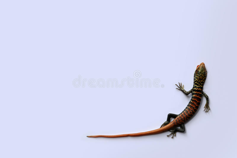 Little colorful lizards on the white background stock photo