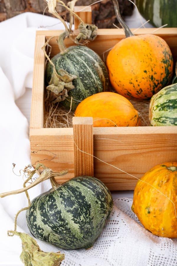 Little colorful ornamental pumpkins squash gourds stock images