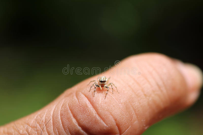 The little colorful spiders collection. stock photography