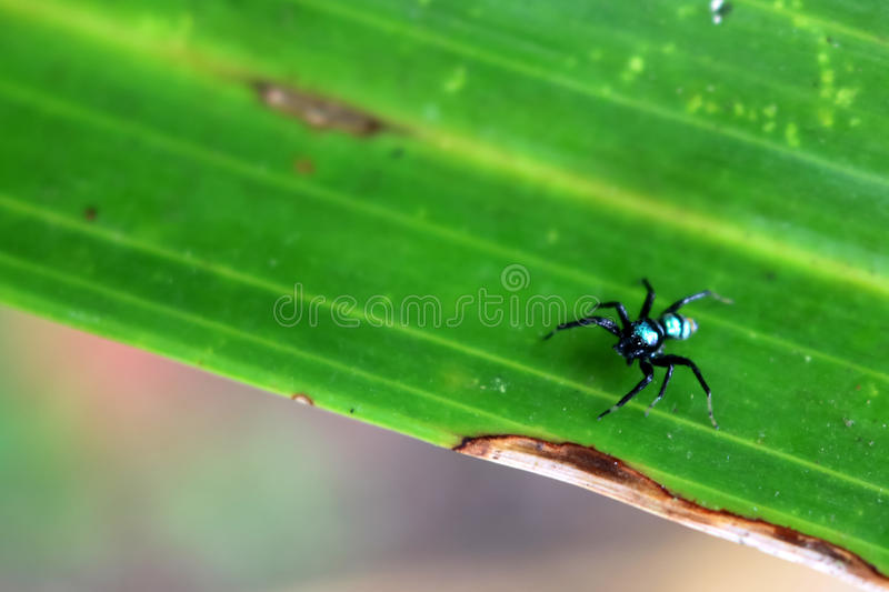 The little colorful spiders collection. royalty free stock photo