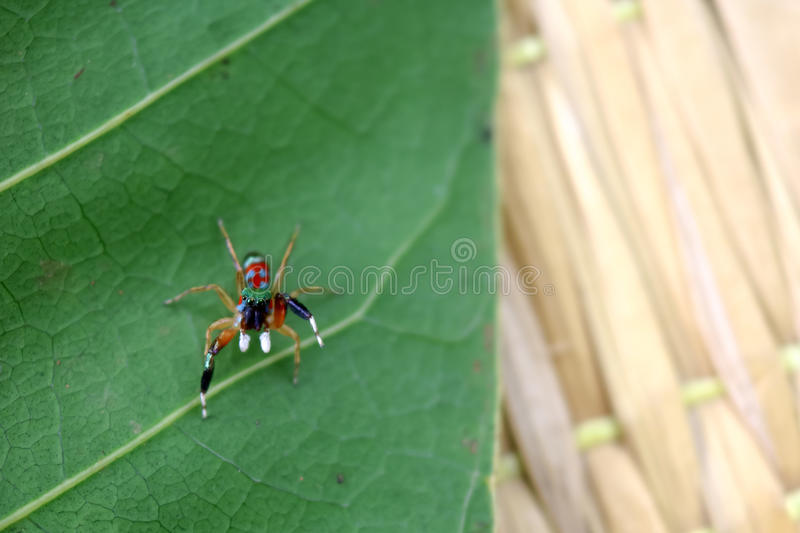 The little colorful spiders collection. stock photo