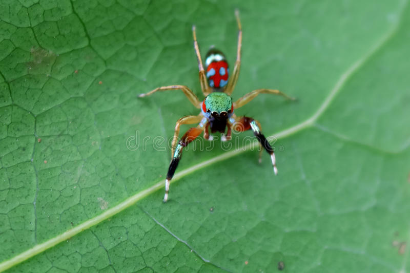 The little colorful spiders collection. stock image