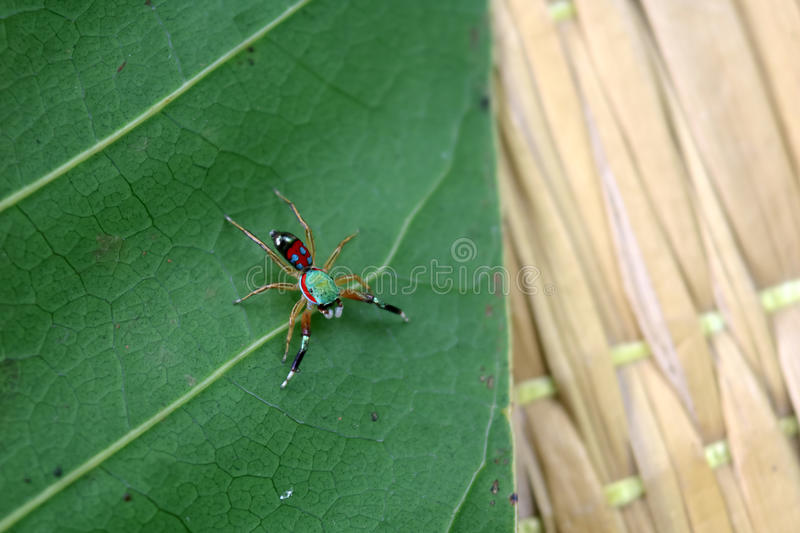The little colorful spiders collection. stock images