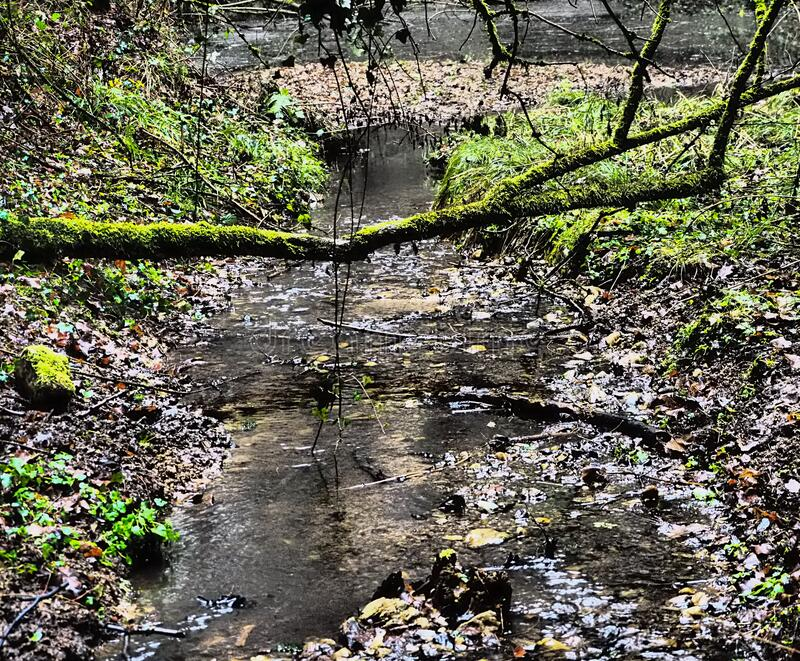 Little creek in forest with tree  trunk. Little creek in forest with tree trunk dramatic stock image