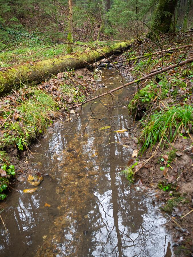 Little creek in forest with tree  trunk. Little creek in forest with tree trunk in winter royalty free stock photo